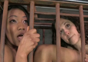 Those submissive lesbian babes are into some kinky lucubrate